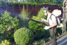 Опрыскивание кустарников